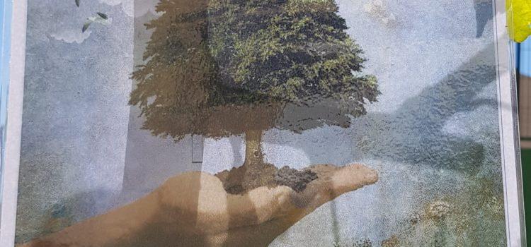 Mi árbol, tu árbol, nuestros árboles. ¡Cuídalos!