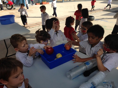 Infantil celebra el dia de la poma en la Salle Alcoi